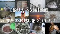【釣りのネタ帳】動画