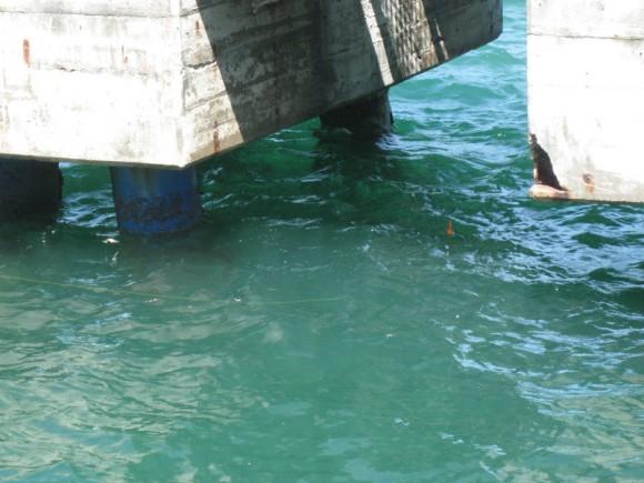 『【住友大阪セメント裏】桟橋前の橋脚間の様子(2)』