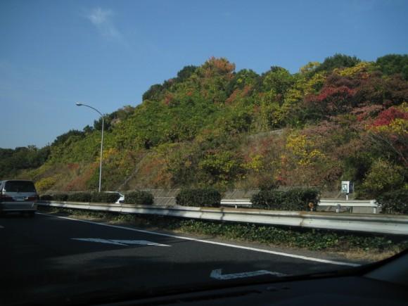 和歌山北部の紅葉はまだ