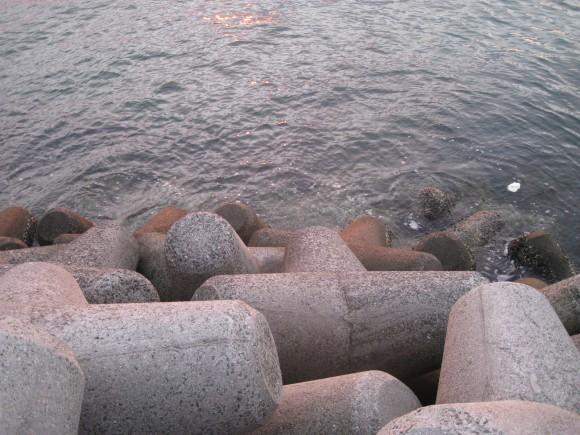 浦港のテトラ