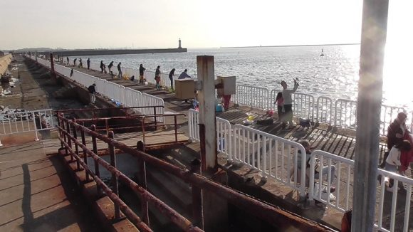 南港魚釣り園護岸の様子