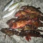 今日の釣果(アジとカサゴ)