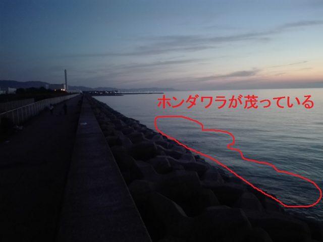 樽井外向きテトラ(南側)