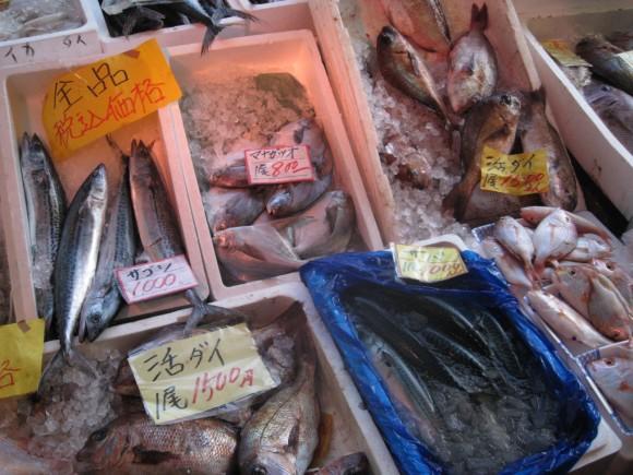 陳列された様々な魚介類