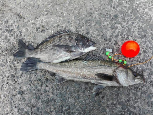 食コン本日の釣果