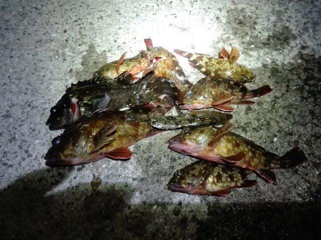 樽井漁港外向きテトラでの本日の釣果