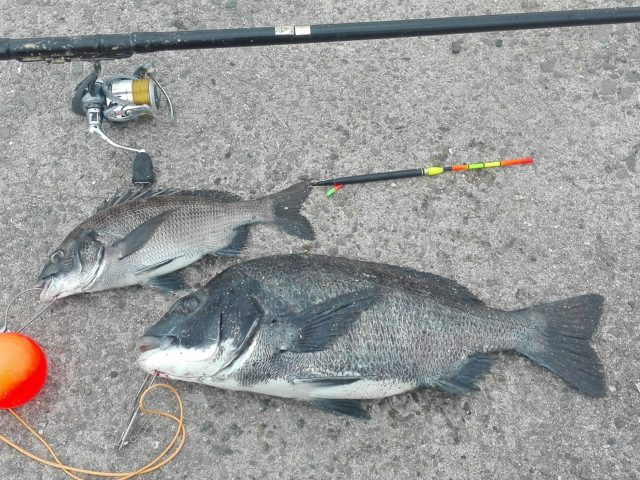 本日の釣果とタックル