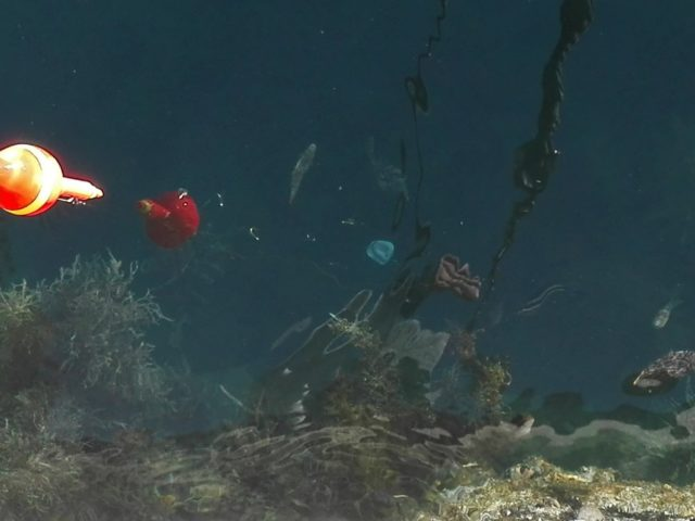 波止際の魚の正体はカワハギ