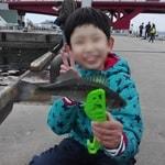 ポートアイランド北公園で投げサビキ釣り