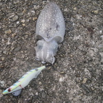 『南港魚つり園でタコ釣り』がコウイカでボウズのがれ!