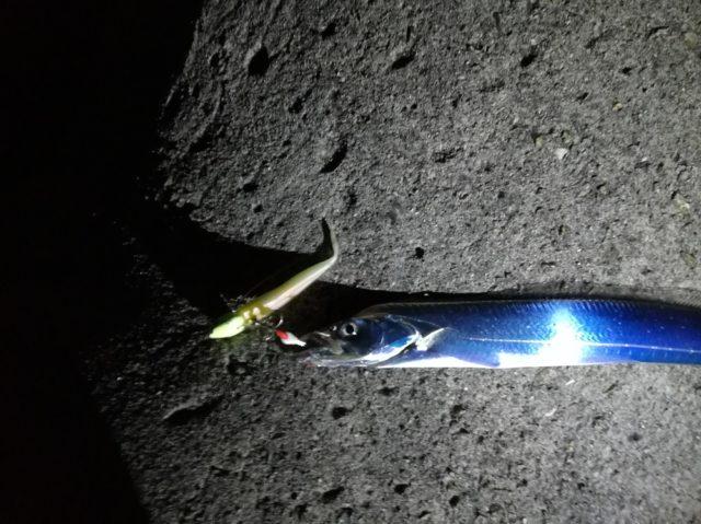 ワインドで1本目の太刀魚