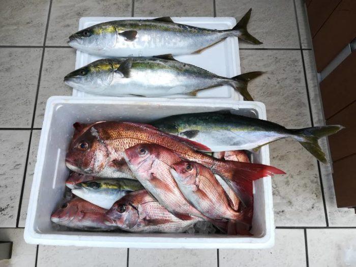 本日の淡路島釣行の釣果
