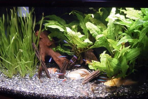 aquarium_060508