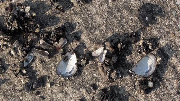 貝を割った後
