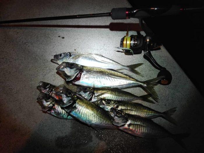 昼でも夜でも海釣りの主役【アジ】