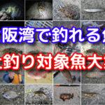 大阪湾の波止釣りで釣れる魚