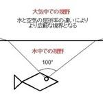 海釣りで釣れる魚の視野と視力(動体視力)