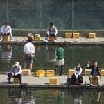 『釣り場』によって釣れる魚は違う【淡水魚の場合】