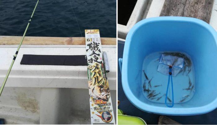 シラサエビを使った胴突き仕掛けのエサ釣り