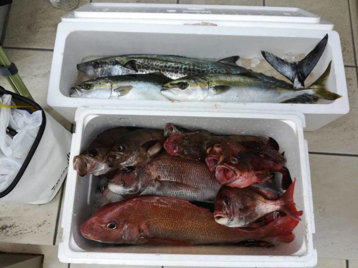 淡路島での船釣り【本日の釣果】