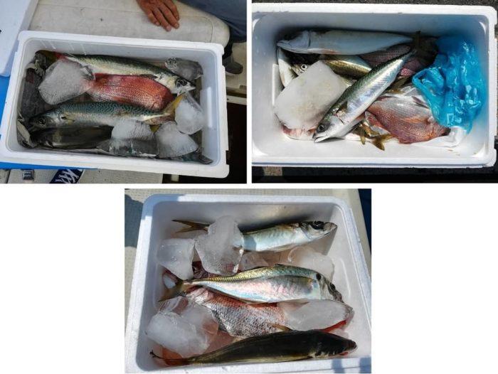 本日の淡路島船釣りの釣果