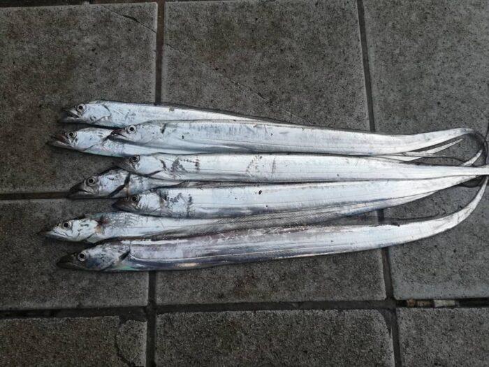 本日のマリーナシティ大波止でのタチウオ釣果