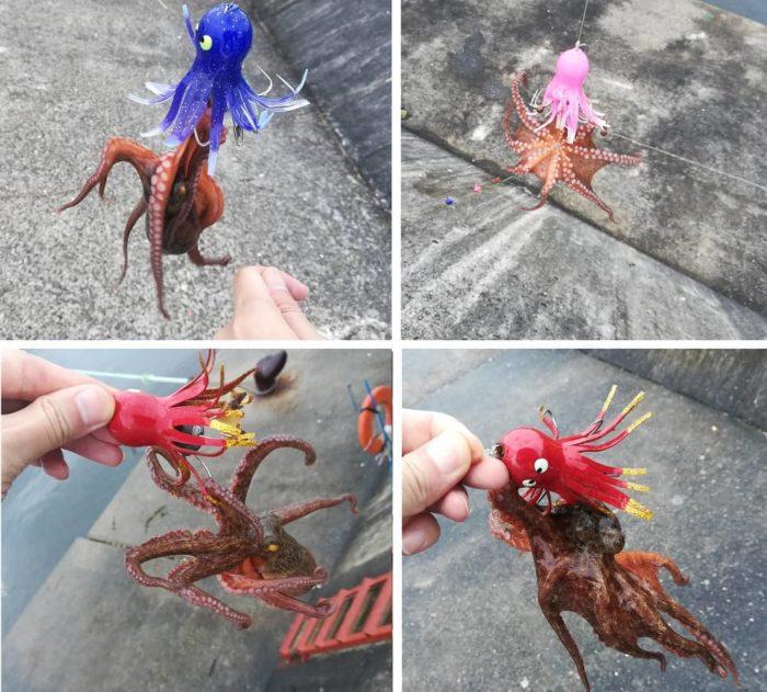 武庫川一文字でポツリポツリ釣れるタコの新子