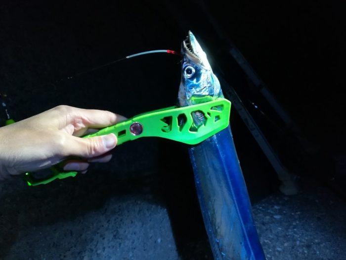 大津川尻で釣った指4本で90cmほどの太刀魚