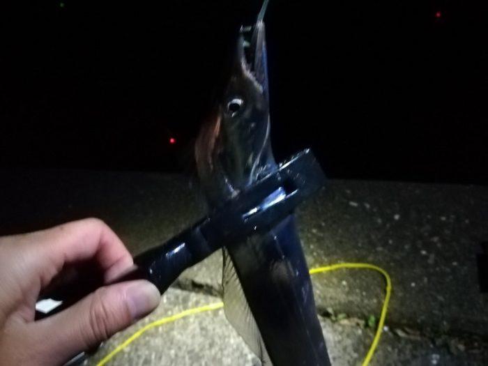 指3本(F3),70cm程度の太刀魚が続く