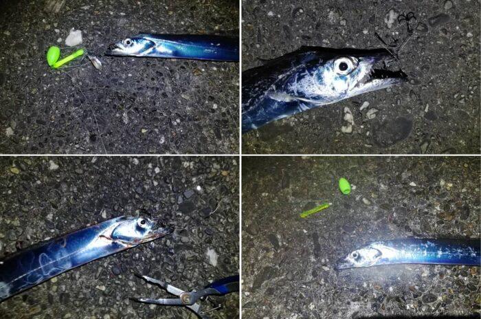 引き釣り(沈め釣り)で爆釣モード
