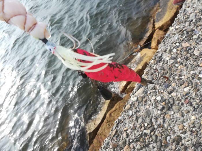 タコエギで釣れるタコエギ