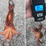 忠岡コンビナート高場でタコ釣りも釣果より損失大!