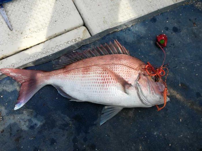真冬のタイラバで真鯛をゲット