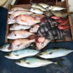 本日の由良沖での釣果