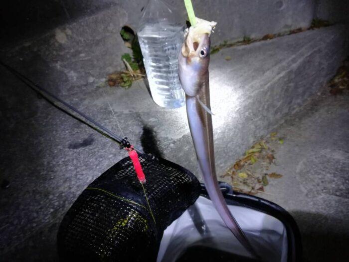 アナゴが釣れる時期と時間帯