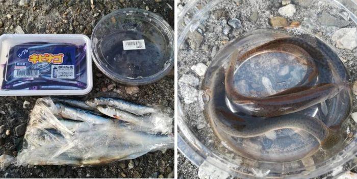 太刀魚の引き釣りで使うエサ