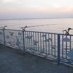 夜の防波堤でアコウを攻略 - 波止際のズボ釣り -
