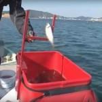 【おさかな外し】サビキで釣った魚を手を使わずに外す便利グッズ