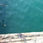 『見えている魚を釣る』ための5つのポイント
