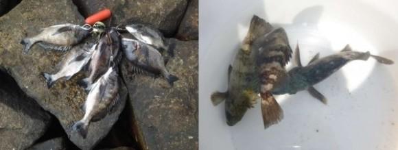 春の釣果速報