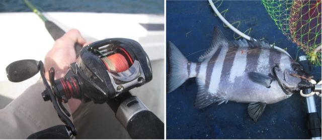 イシダイの船釣りで使用