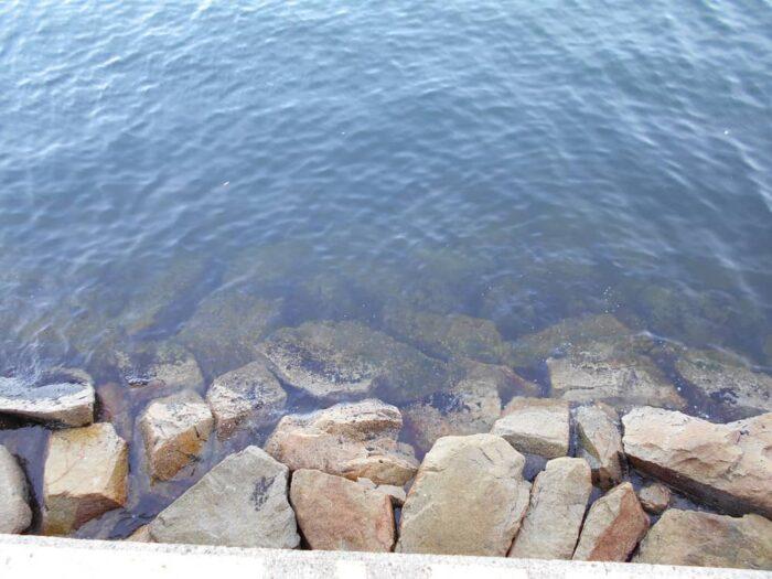 タコが釣れる釣り場は根掛かりし易いシモリだらけ